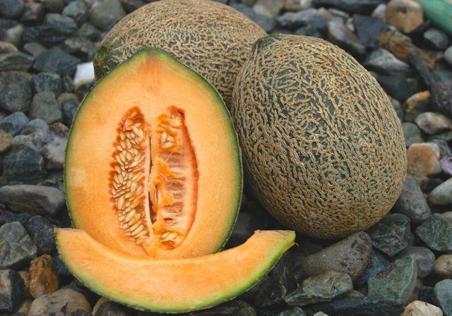 Выращивание дыни в открытом грунте: технология, уход, сорта, секреты