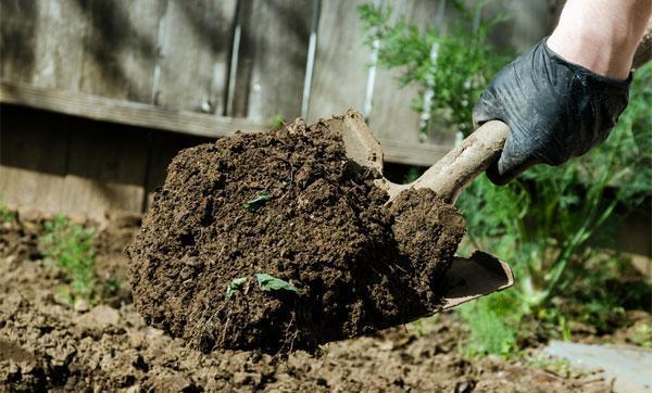 Выращивание хрена в открытом грунте: технология, уход, сорта, секреты хорошего урожая