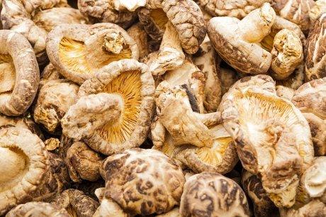 Выращивание грибов шиитаке в домашних условиях: технология