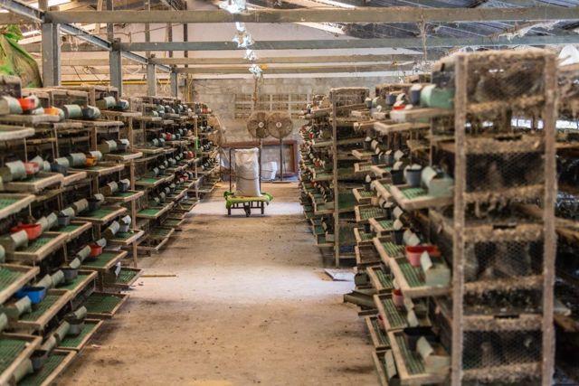 Перепелиная ферма как бизнес