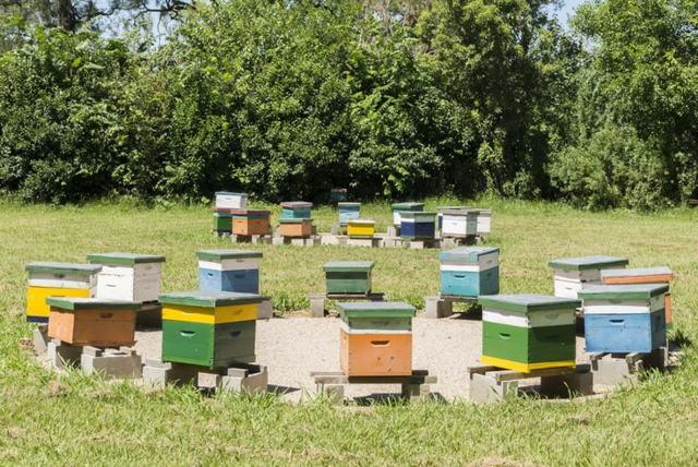 Пчеловодство как бизнес: с чего начать, что нужно, как организовать, как преуспеть
