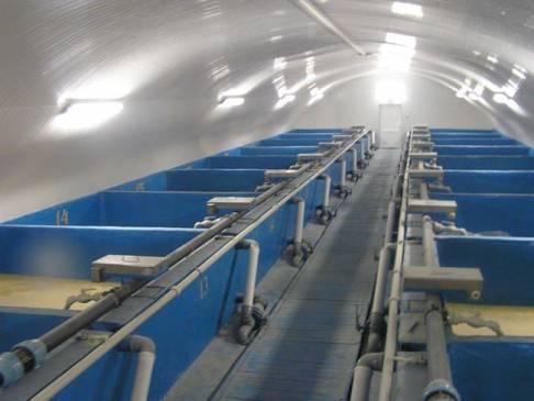 Разведение осетровых: мини ферма в домашних условиях
