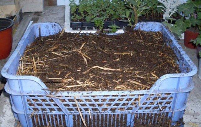 Как создать производство биогумуса в домашних условиях