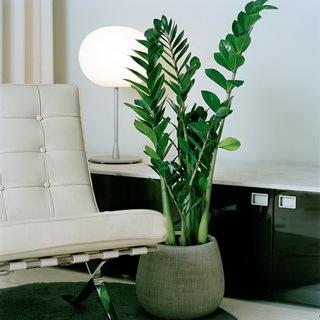 Бизнес на комнатных растениях на дому